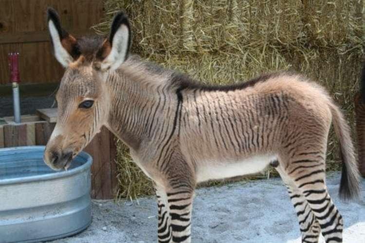 Ibridi Animali realmente esistenti davvero INCREDIBILI!