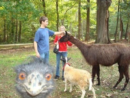 Photobombing! Divertenti Animali protagonisti del fenomeno virale più divertente del Web!
