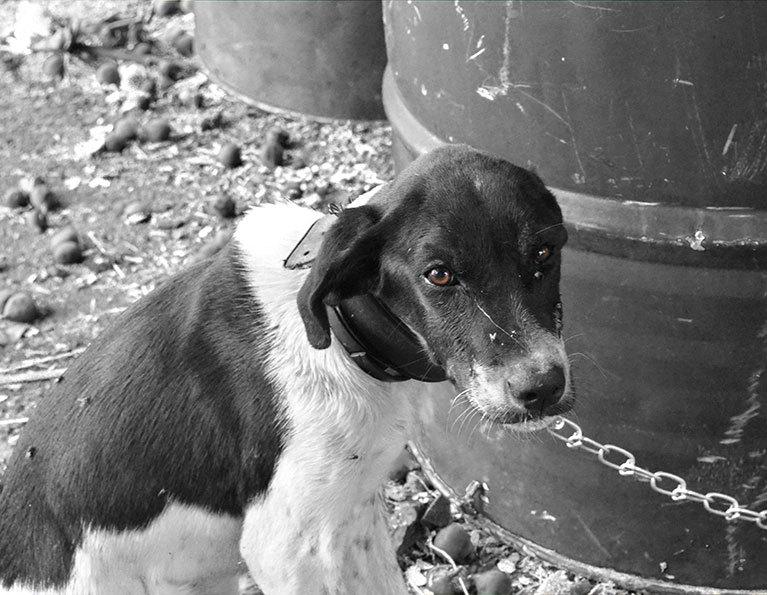 Multa per chi lega il proprio cane domestico