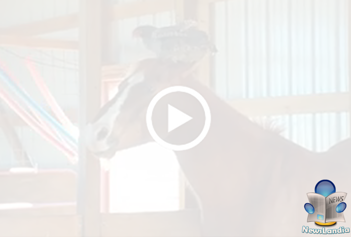 Video: Gallina si Diverte con un Cavallo