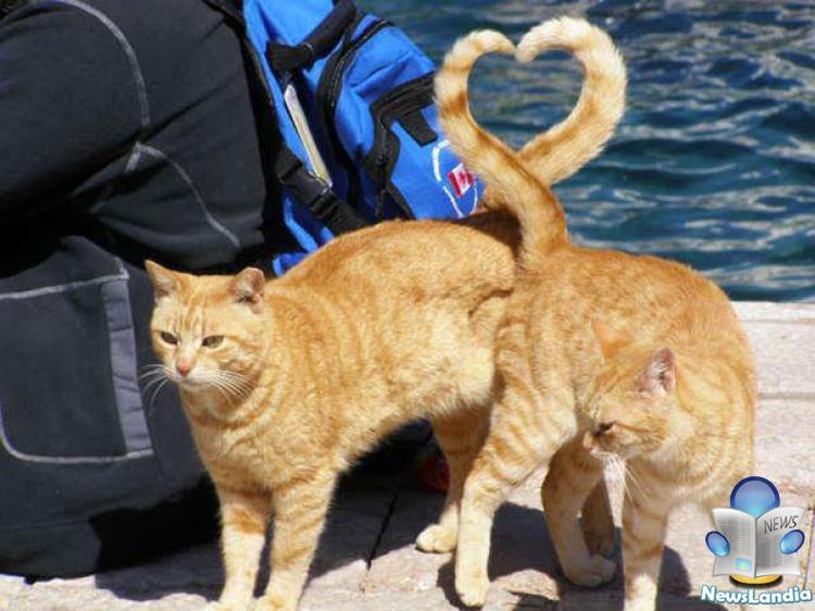 Gatti e alimentazione: quale è la scelta migliore per i nostri amici felini?
