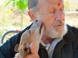Anziano Cani Pensione Newslandia
