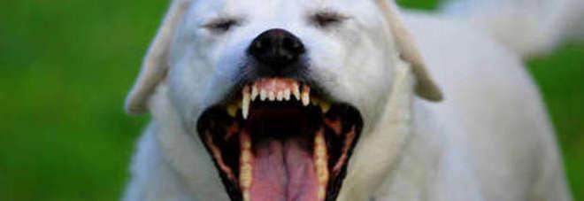 Bambina di due anni morsa in viso da un cane