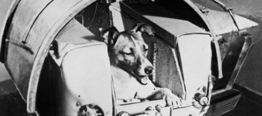 Laika, il cane sacrificato per la gara allo Spazio: la verità