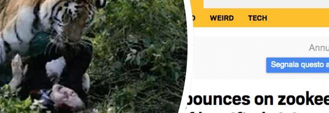 Russia, tigre attacca l'addetta allo zoo