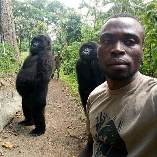 Un selfie con i gorilla: la foto che fa il giro del web