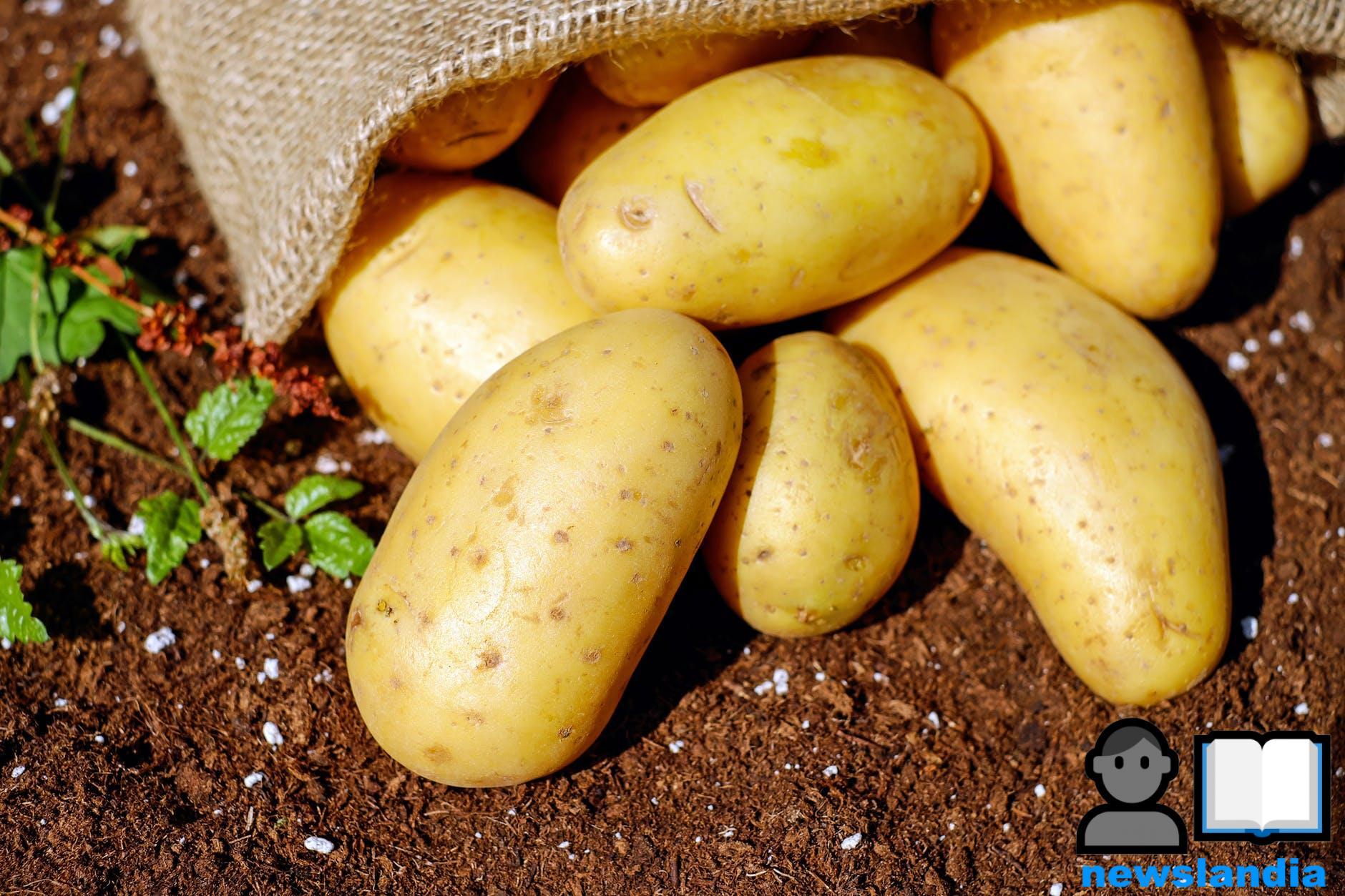 La patata: le virtù del tubero americano che ha conquistato l'Europa