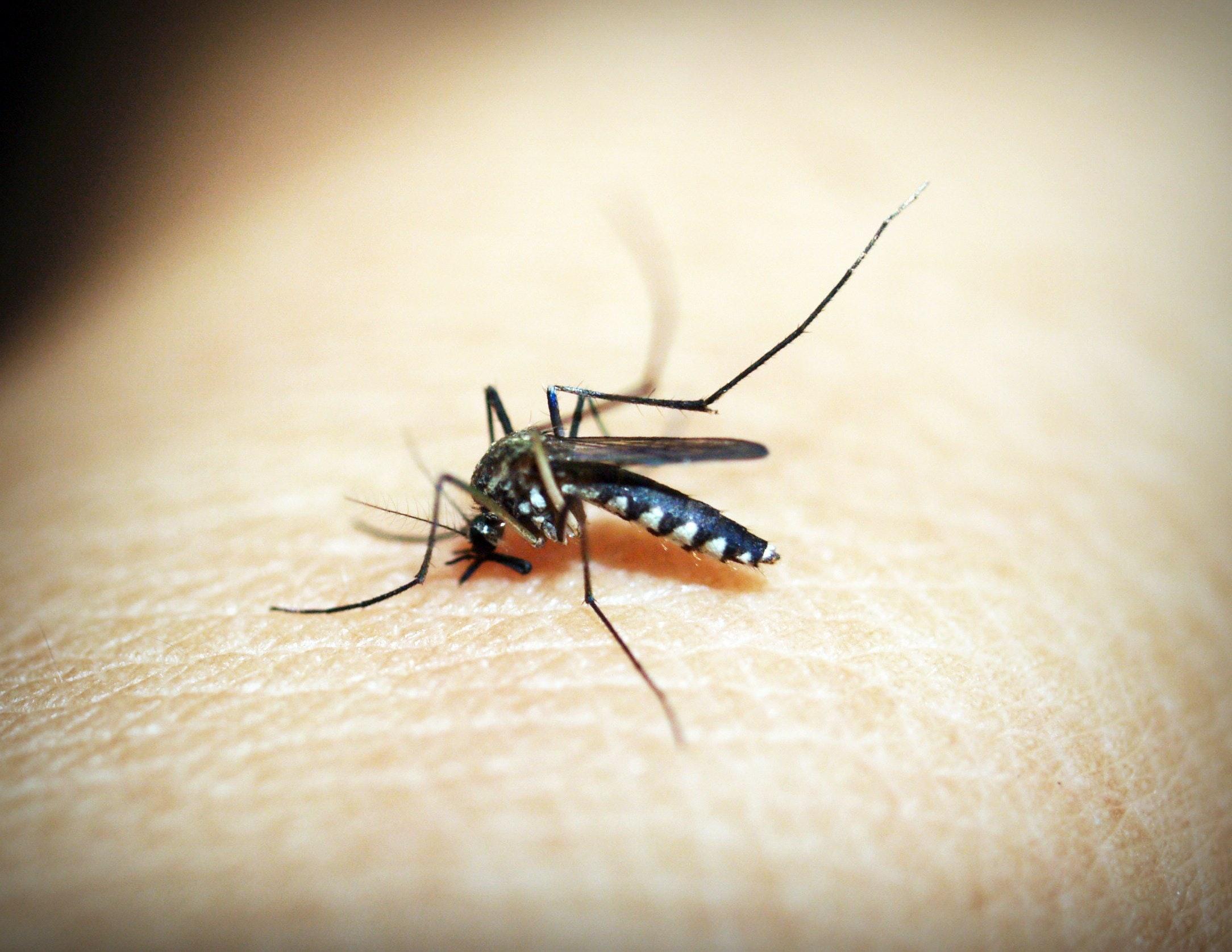 Rimedi naturali contro le punture di insetto