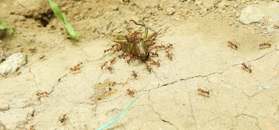 Rimedi naturali: come sbarazzarsi delle formiche