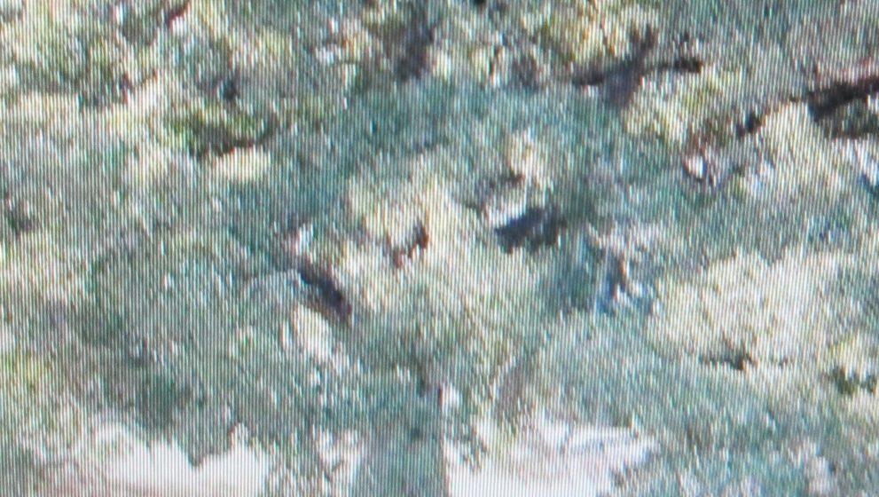 La Quercia vallonea di Tricase è  l'albero più bello d'Italia