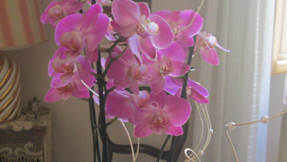 Orchidea: come prendersi cura di questa pianta delicata e raffinata